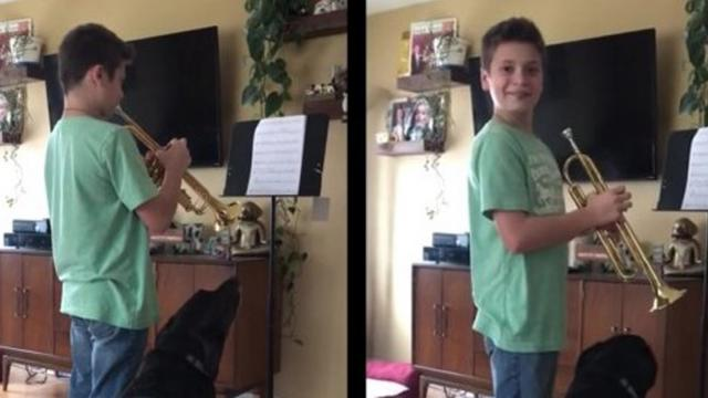 This puppy adores his owners trumpet playing