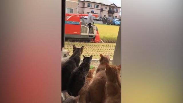ALL THESE CATS ARE IN AWE OF THE BIG MACHINE THAT'S IN THEIR BACKYARD