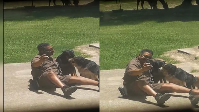 UPS Guy Poses For Selfie With Dogs While On Delivery