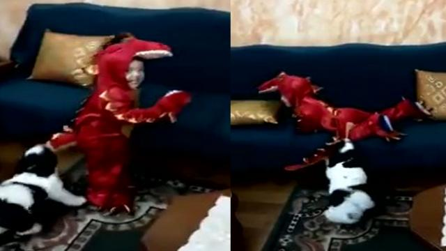 Dog Keeps on Dragon His Best Friend Down
