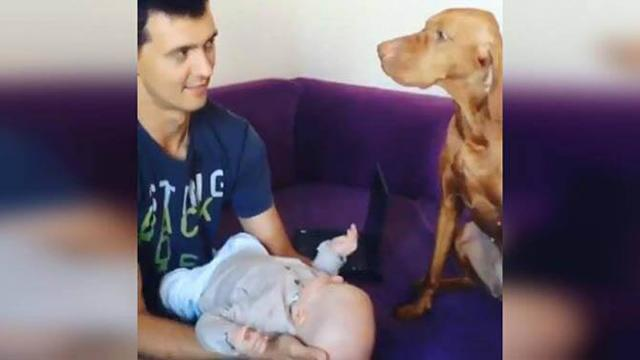 Adorably Jealous Dog Doesn't Like When Her Human Kisses His