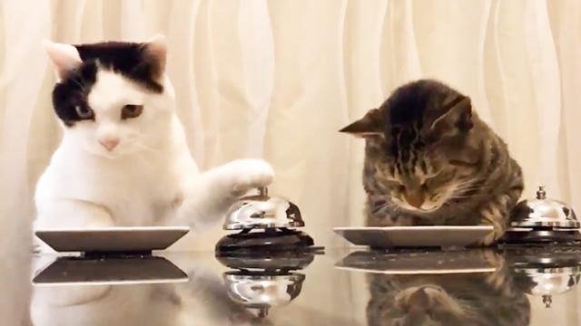 WATCH- These two cats have belled millions around the world with their cuteness - The Indian Express