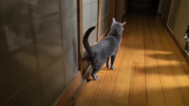cute Cat knocks on door with her feet_Large