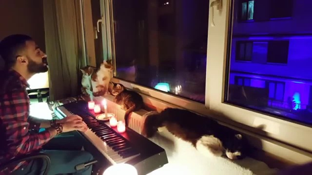 KITTEN ON THE KEYS – A MAN WHO LOVES HIS CATS