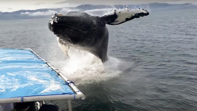 Humpback Soaks Alaska Whale Watchers During Close Encounter - YouTube