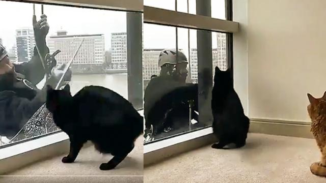 Funny kitten trên Twitter- -Cat plays with the window washer… -