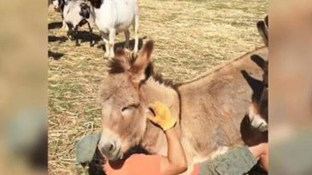 These Animals Love Hugging and Cuddling as Much as Humans and It Is Adorable