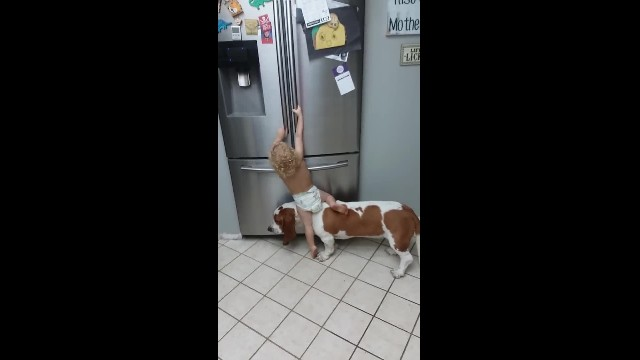 Little Boy and Basset Hound Tag Team to Get Food