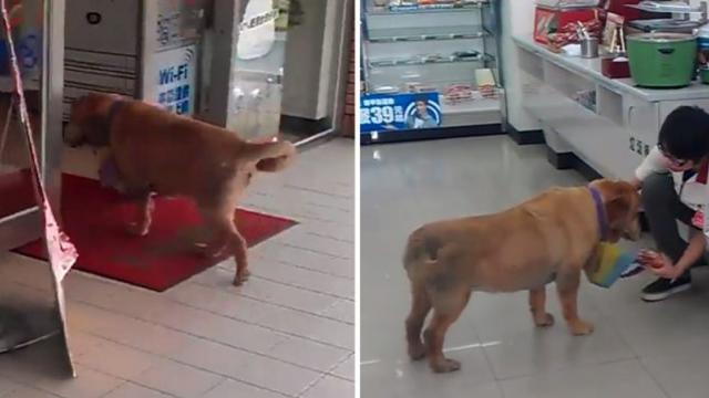 Smart dog goes shopping at local convenience store all by itself