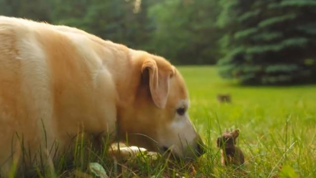 Watch a dog and a wild baby bunny become fast friends