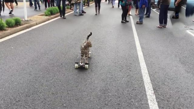 This Cat On A Skateboard Has More Coordination Than All Of Us_Medium