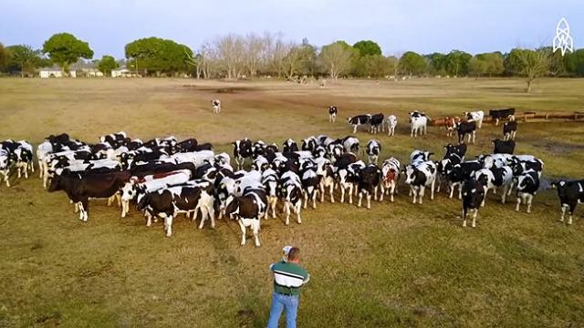 Dedicated Florida Dairy Farmer Serenades His Beloved Cows With Live Jazz on His Trombone