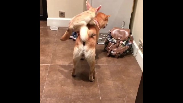 This quick brown fox actually does jump over the lazy dog