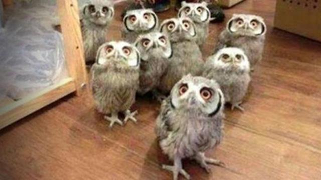 Owl - A Funny Owls And Cute Owls Compilation _ NEW