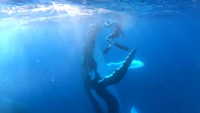 Humpback Whale High-Fives Scuba Diver In Magical Video