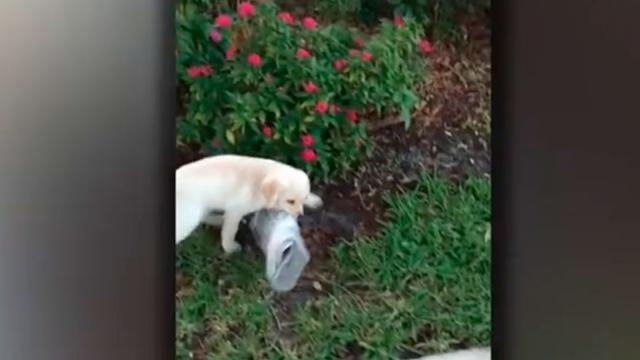Dad Notices His Pup Struggling At The End Of The Driveway And Then He Sees It