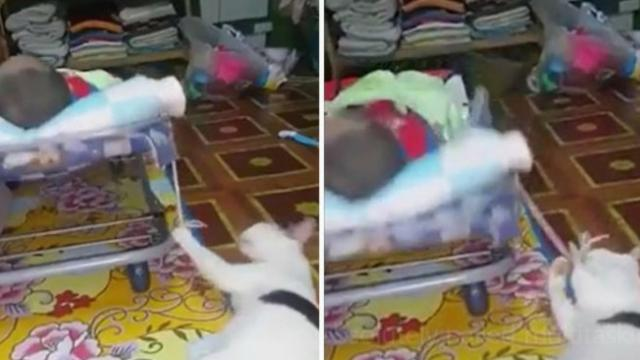 The Best Babysitter This Cat Has Absolutely Nailed Multitasking