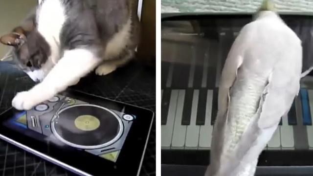 Animals Playing Video Games On iPads Compilation (2)