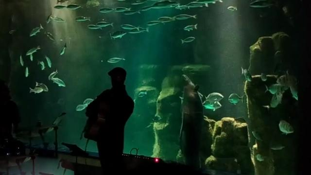 Smooth mover Watch amazing moment eel DANCES to jazz music -