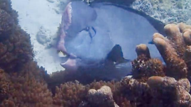 Say cheese! Friendly fish appears to flash pearly white gnashers for diver
