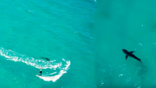 Drone Footage Captures Great White Shark Circling Kitesurfer - Pretty 52
