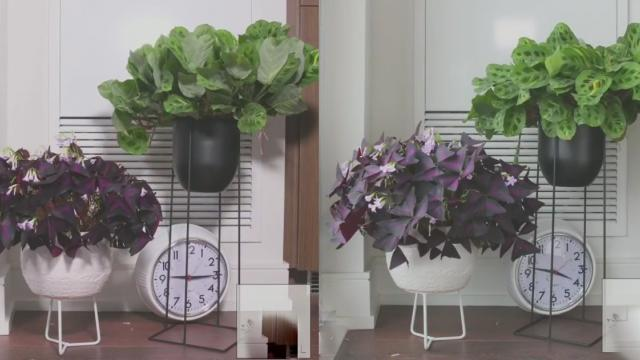 An Amusing Timelapse Showing How Two House Plants Occupy Themselves Over the Course of a Single Day_