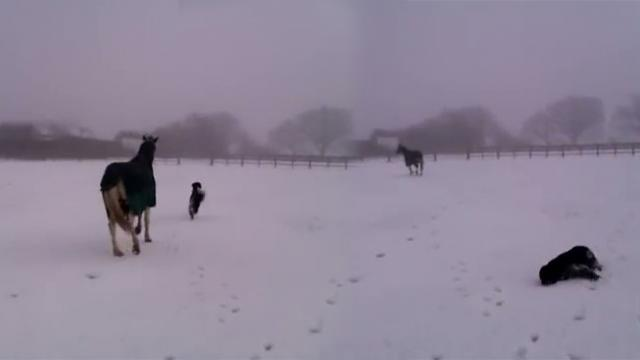 Two Best Pals Enjoy Playing In The Snow Together