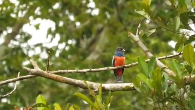 See the Sounds of the Amazon in This Mesmerizing Video