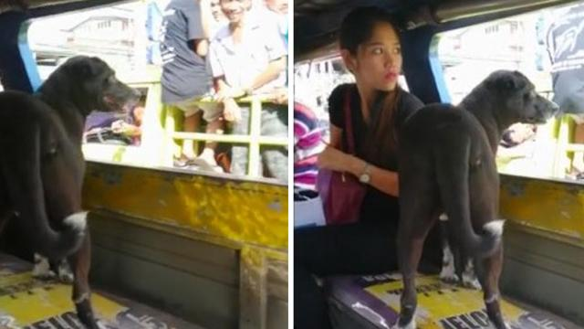 Adorable dog takes solo bus ride to chase owner going to