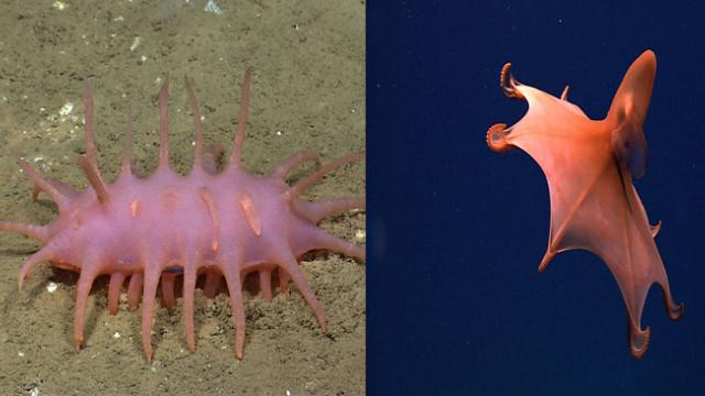 Amazing Never-Before-Seen Sea Creatures Found 20,000 Feet Under The Sea