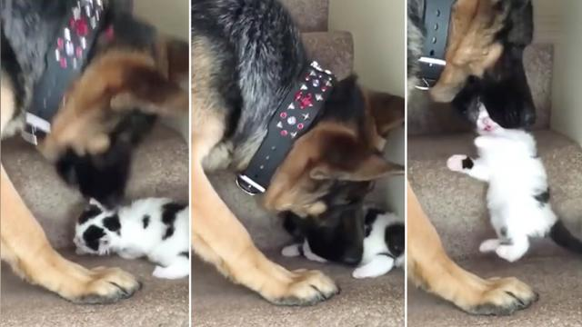 Animals rescuing other animals—these courageous furballs