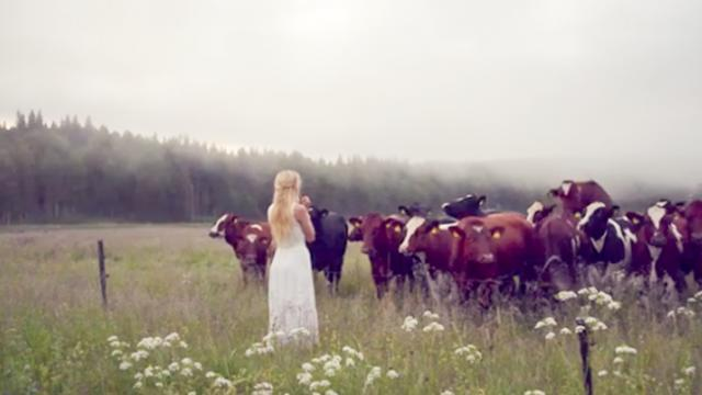 """Swedish artist calls over to a herd of cows with an ancient high-pitched herding call called """"kulnin"""