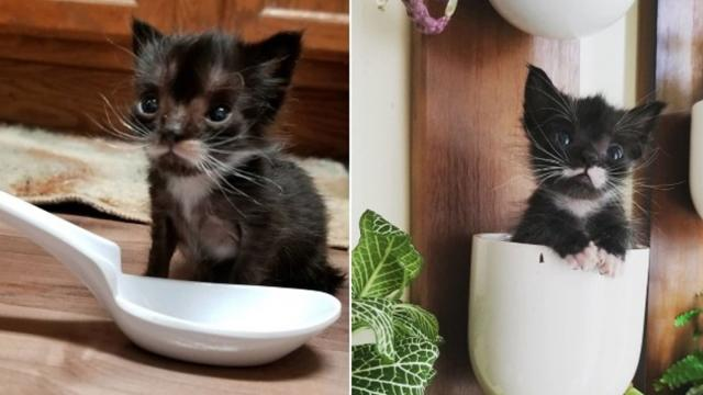 Rescued Kitten Size of a Spoon is Determined to Grow Big and Strong