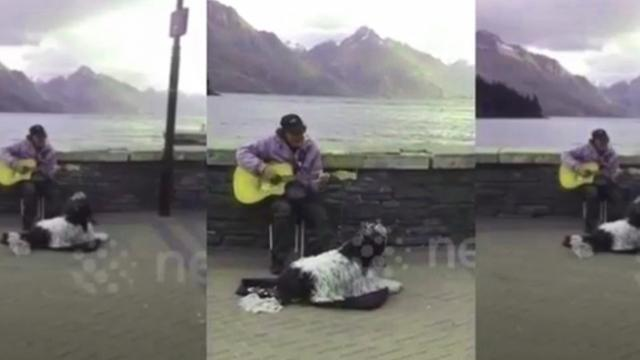 Busking duo, man and his dog duet their way into the public's heart