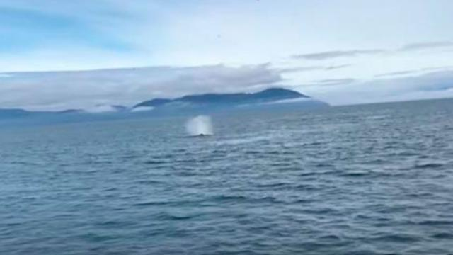 Tourists Distracted By Sight In Water When Camera Suddenly Turns Making Everyone Scream