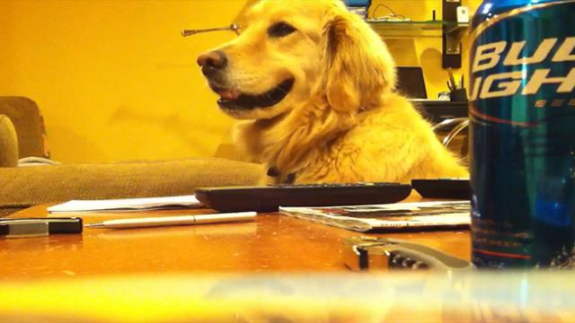 Words Can't Describe How Cool This Dog Is…Keep Watching His Face And You'll See!