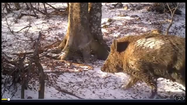 Man Filmed a Tree In The Woods For a Year and Captured Things Most People Will Never See