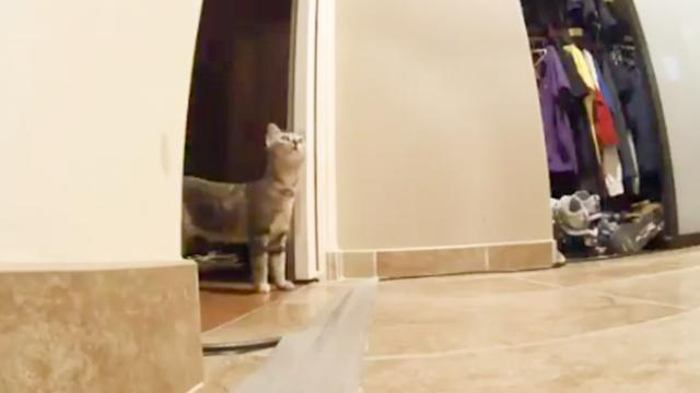 NBC Los Angeles on Twitter- -Here's an adorable video of a kitten during the 4.4 magnitude earthquak