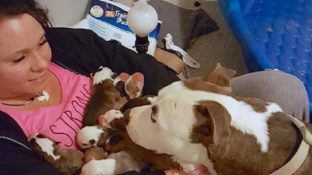 Pit Bull Shares 11 Newborn Puppies With New Foster Mom
