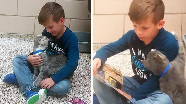 Boy Visits Animal Shelter To Practice Reading Skills, But Needy Cat Has Other Ideas_Large
