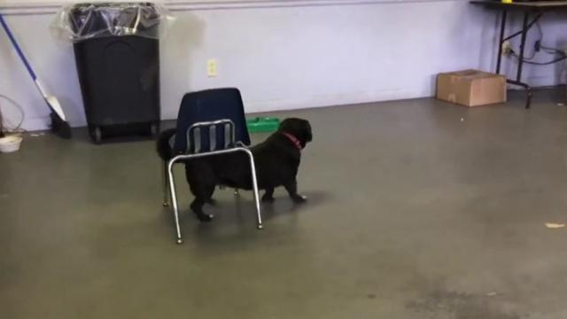 Einstein Dog Takes Matters Into His Own Paws To Get What He_Large