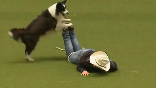 Cowboy And Border Collie Put On Unique Country Dance Routine For Excited Fans At Dog Show
