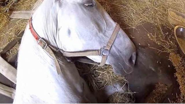 Heartbroken Man Whispers Dont Sleep In His Horses Ear Gets Response Catching Even Him Off Guard