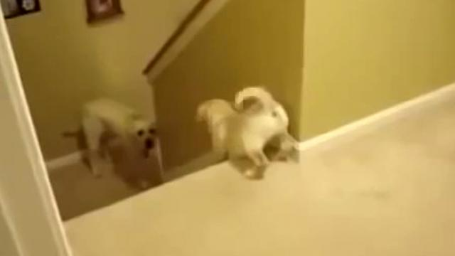 Mom Tries Teaching Her Pup To Go Down The Steps, But Watch The