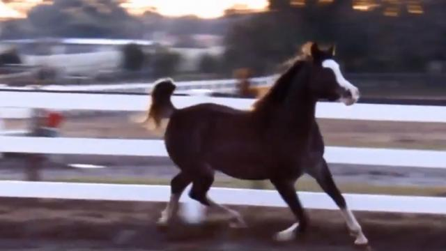 They Let Their Horse Out Of The Barn - Her Unique Way Of Running Left Them In Awe