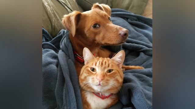 Webcam Captures Cat Joining Dog on the Sofa to Snuggle Together