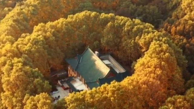 This drone footage of fall foliage enveloping Nanjings Meiling