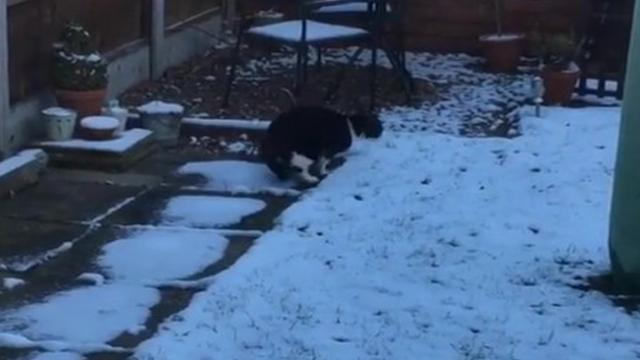 Cat Doesn't Know What To Make Of His First Experience With Snow