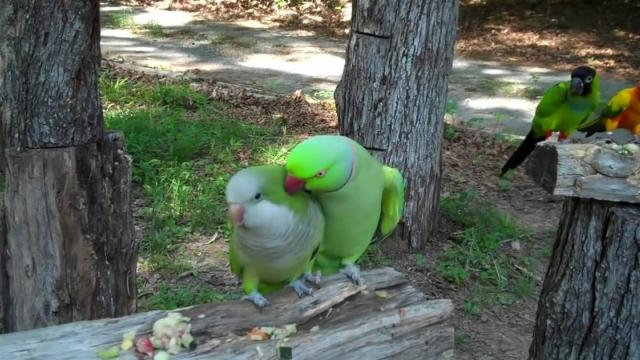 You ll Squeal When You Hear What This Parrot Said To Her New Best Friend