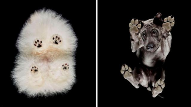 Photographer Takes Photos Of Dogs From Underneath